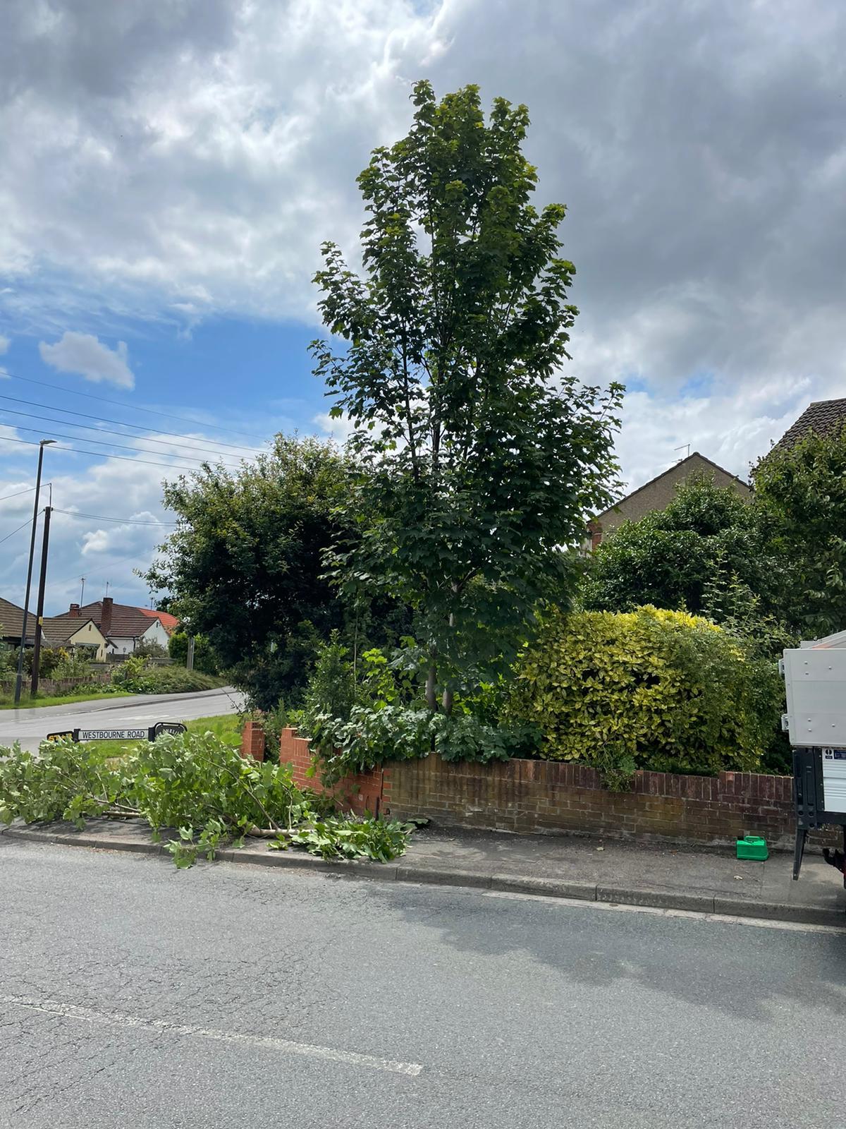 Tree Surgery Bristol