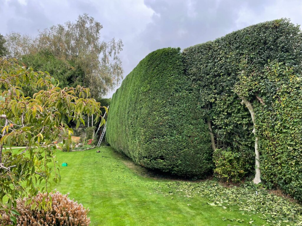 hedge trimming services bristol and avon